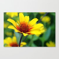 Prairie Flower II Canvas Print