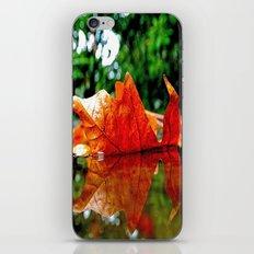 Fallen leaf iPhone & iPod Skin