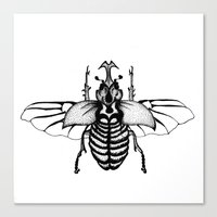 Beetle Canvas Print