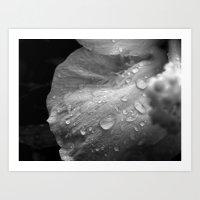 Black and White Hibiscus  Art Print