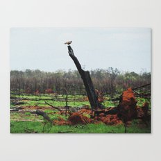 Perched Canvas Print