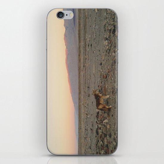 Desert Coyote iPhone & iPod Skin