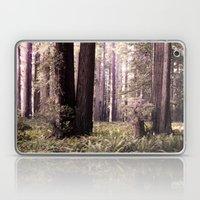 Redwood Forest Laptop & iPad Skin