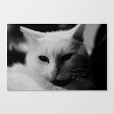 Generic Cat Picture Canvas Print
