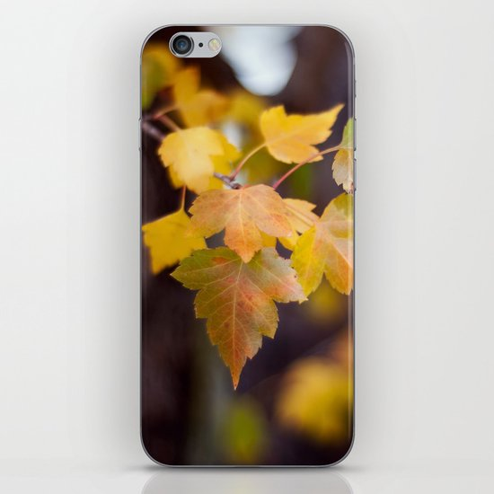 Autumn Yellow iPhone & iPod Skin