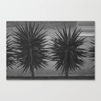 BUSH Canvas Print
