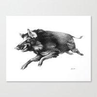 Running Boar Canvas Print