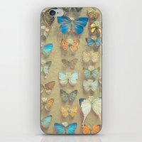 The Butterfly Collection II iPhone & iPod Skin
