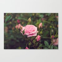 Sweet Summertime I Canvas Print