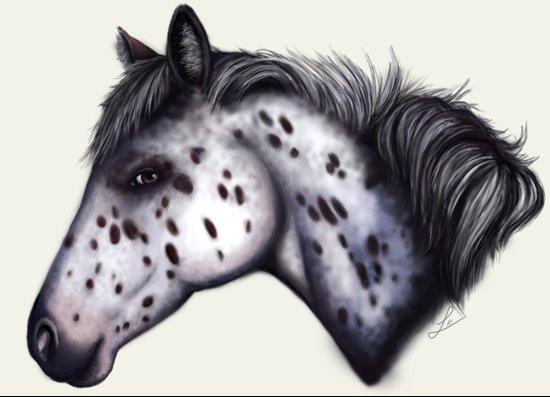 Appaloosa horse Art Print