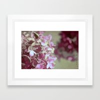Hydrangeas No. 4 Framed Art Print
