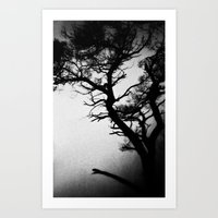 Tree In The Fog Art Print