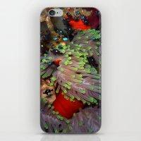 Domino Damselfish In Ane… iPhone & iPod Skin