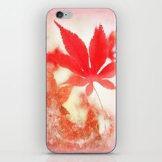 Red Leave iPhone & iPod Skin