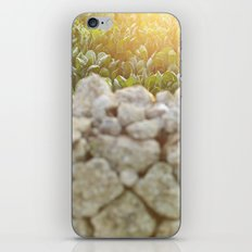 Sunset over a Mediterranean field and a dry stone wall Photo for Interior Design iPhone & iPod Skin