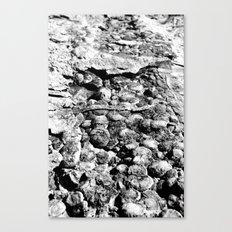 Dinosaur Skin (BW) Canvas Print