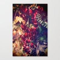 Red Vine Canvas Print