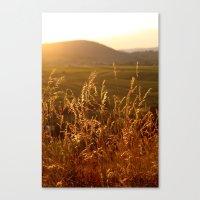 Gold Warm Light - JUSTAR… Canvas Print