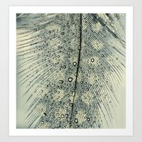 feather Art Prints featuring feather by Ingrid Beddoes