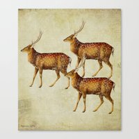 Vintage Deer Canvas Print