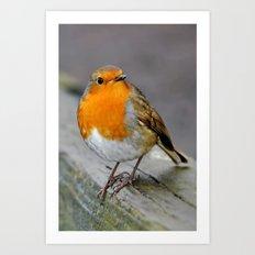 Cheeky Robin  Art Print