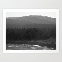 Forest of Trees Art Print