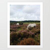 New Forest Wild Horses Art Print