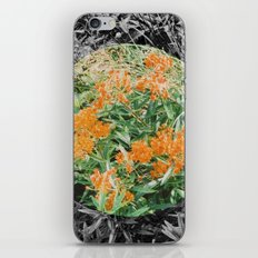 High Line Sunshine iPhone & iPod Skin