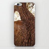 Looking Upwood iPhone & iPod Skin