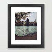 PRAGUE SWANS Framed Art Print