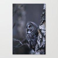 GREAT GREY OWL ON SILVER BIRCH TREE Canvas Print