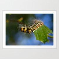Yellownecked Caterpillar  Art Print