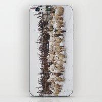 Snowy Sheep Stare iPhone & iPod Skin