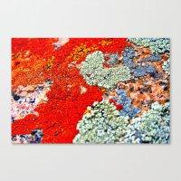 Likin' This Lichen Canvas Print