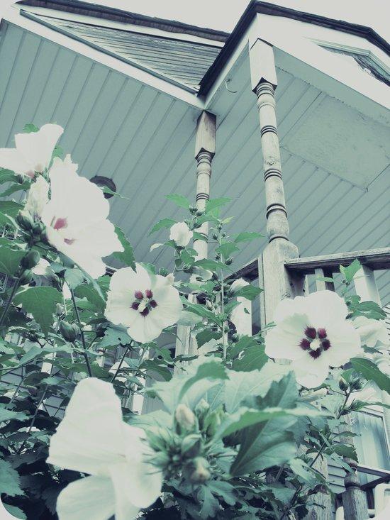 Rose of Sharon ~ flower photography Art Print