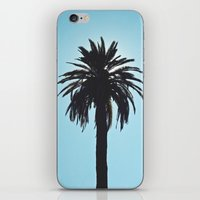 Palm Tree Silhouette iPhone & iPod Skin