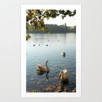 Swans In Autumn Art Print