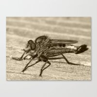 robber fly 2016 II Canvas Print