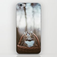 Cat in a basket iPhone & iPod Skin