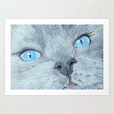 Blossom the Ragdoll Cat Art Print