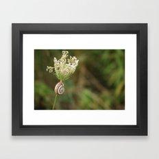summersnail Framed Art Print
