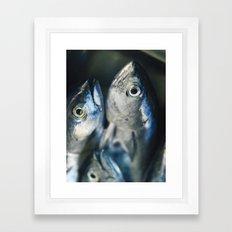 Tuna fish - still life - fine art - photo - print Framed Art Print