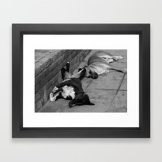 Greek Dogs Framed Art Print