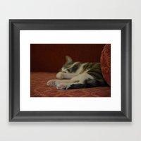 Cat Paws Framed Art Print