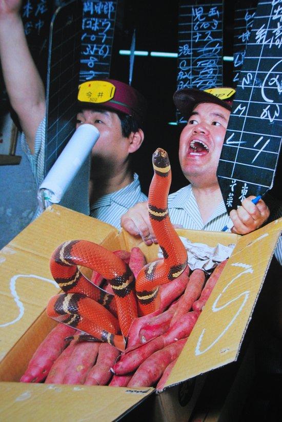 Snake in a Box Art Print