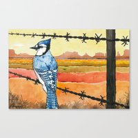 Blue Jay in the Desert Canvas Print