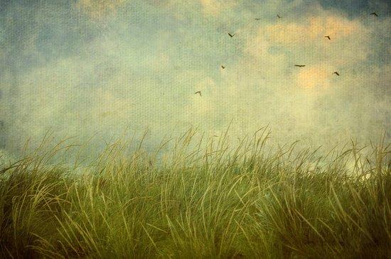 Taken by the Wind Art Print