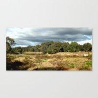 Swamp - Heritage Trail Canvas Print