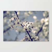 Canvas Print featuring Blossoms by Katie Hansen