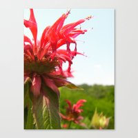 Spiked Red Flower Canvas Print